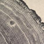 Red Oak Detail